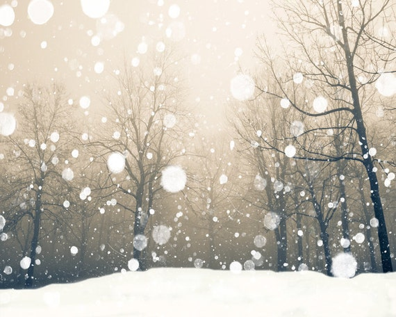 Snowflakes, falling snow, snow photography, snow photo, sepia photo, nature photo, bare trees, winter landscape, maple trees, winter snow