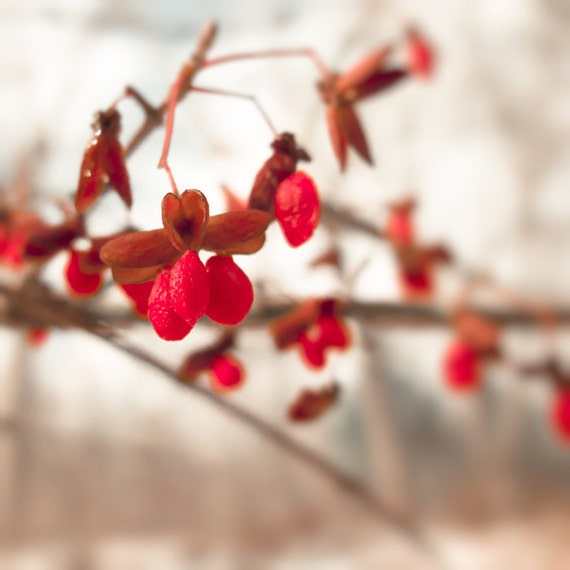 Red winter berries winter photography snowy scene red decor