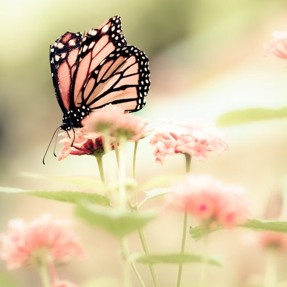 Butterfly photograph, fresh mint, Spring, pink, dusty rose, girl's room, fairytale, mint, pastel - Queen of Spring 8x8
