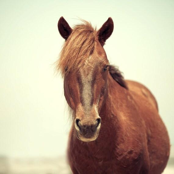 Horse photography, horse art, wild horse, animal photograph, home decor, for a horse lover, equine art, brown horse print, carolina