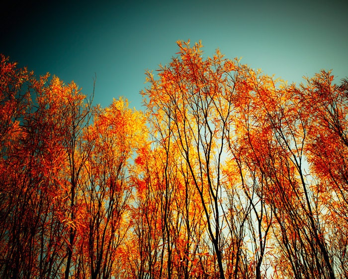 Wall Art Red Leaves : Autumn photo wall art red leaves forest fall foliage by