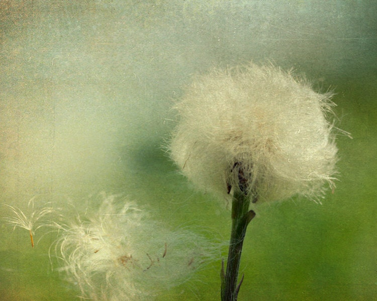 CLEARANCE Home decor emerald green dandelion by bomobob on Etsy