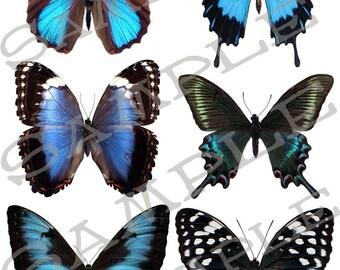 Butterfly collage sheet 1B Jpeg Sheet