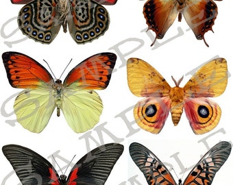 Butterfly collage sheet 5 B