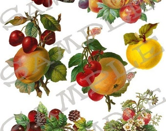 Fresh Fruit Collage Sheet 1ffc