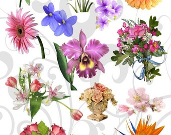 Flower Beauties Collage Sheet 111fbc Jpeg Sheet and Individual Png Images