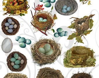 Collage Sheet Bird Nests 11 bnc You get a Jpeg Sheet as Well as Individual Png Images