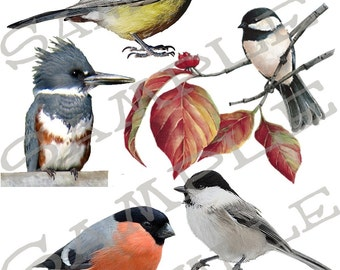 Bird Graphics Collage Sheet 3