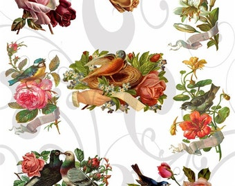 Pretty Birds Collage Sheet Single PNG Images and JPEG