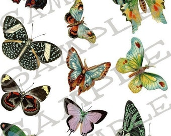 Butterfly collage sheet 9B You will Get a Jpeg Sheet and Individual PNG Images