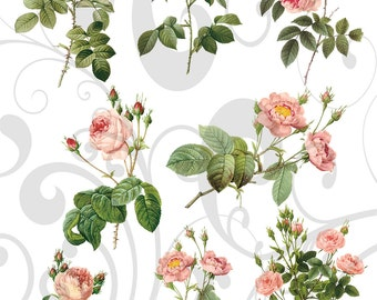 8 Seperate Pink Roses PNG Images