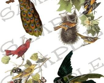 Mixed Bird Collage Sheet 3A
