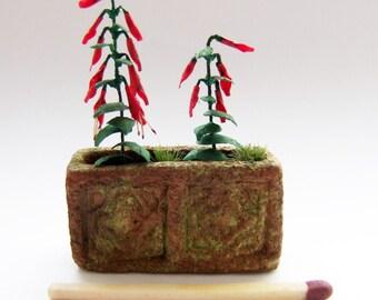 Miniature salvia plant