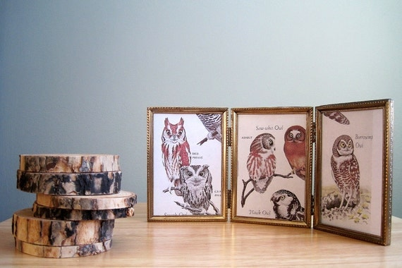 Vintage Owl Prints in Trifold Metal Picture Frame 3 x 5