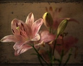 Lily photograph, flower print, home decor, Fine Art Photograph