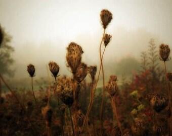 Autumn decor, Fog photograph, queen annes lace print, home decor, Fine Art Photograph
