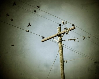 industrial photography fine art photography birds telephone pole gallery wrap home decor