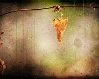 nature photography leaf orange fine art photography Limited Edition gallery wrap 5/75