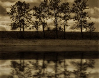 landscape photography fine art photography sepia brown  print trees woodland home decor