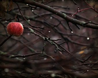 nature photography Autumn red apple oxblood woods fine art photography print dark art home decor office decor branches