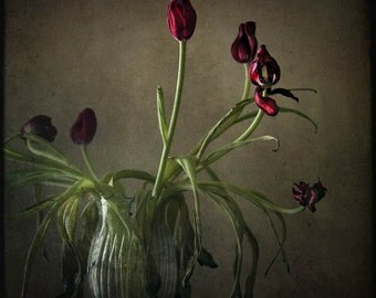 still life fine art photography nature red tulips oxblood  bouquet vase home decor office decor