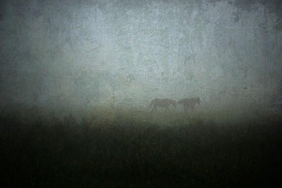 animal photography fog horses mist blue fine art photography farmland 8x12 print home decor office decor