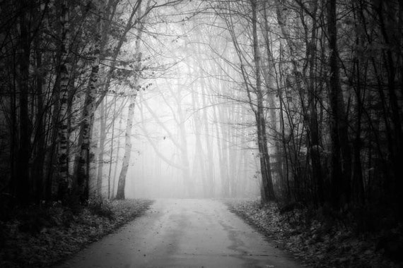 landscape photography black and white photography, fine art photography woodland home decor