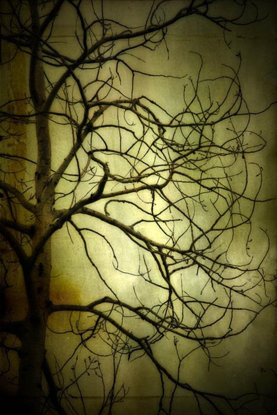 Spooky Tree photograph, home decor, Gallery Wrap Fine Art Photograph