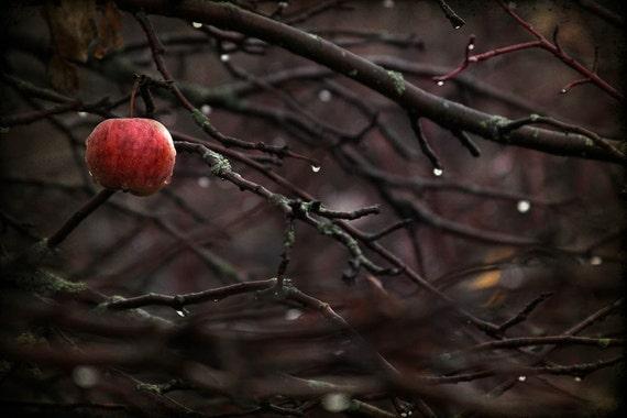 nature photography autumn red apple oxblood woods fine art