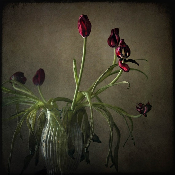still life fine art photography nature red by ...
