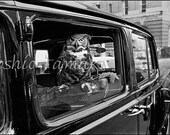 Reserved for Heather, Owl on Boylston Street, Boston  1976