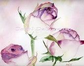 Watercolor Painting Rose Art, Rose Painting, Rose Watercolor, Floral Art, Rose Art Print Titled Clarice's Roses