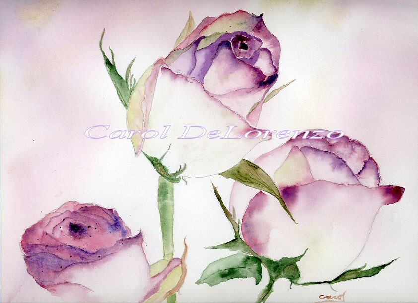 Watercolor painting rose art rose painting rose watercolor for How to paint a rose watercolor
