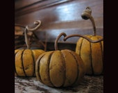 Baby Pumpkin Harvest VII