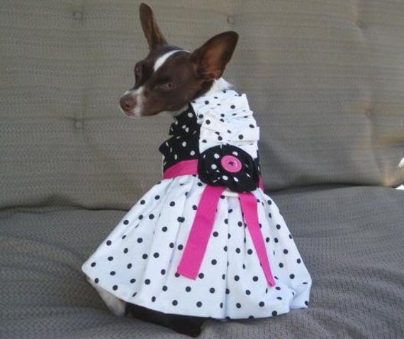 POLKA DOT PARTY Dress - Wedding Bridal - 2 to 12 lb dogs m-made to order