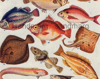 Fish of Warmer Climates Double Sided Color Chart for Framing