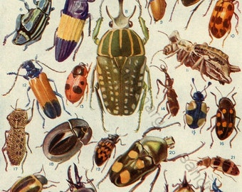 1923 Meet the Beetles European Moths and Caterpillars  Double Sided Chart for Framing