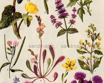 Double Sided Color Lithograph Flowers of the Marshes Botanical Print