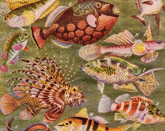 1894 Fishes in Their Natural Colors Chromolithograph for Framing