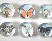 Pollinators set of glass thumbtacks or magnets
