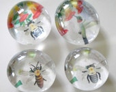 Bees and Hummingbird set of glass thumbtacks or magnets