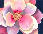 Macro Magnolia, Giclee Print, 5 x 6.5 inches