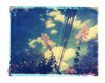Polaroid Photography Flowers Clouds Blue Costa Rica Pink Tropical Vintage Art 11x14 Print