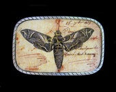 Insect Belt Buckle.  Interchangable.  Mens Womens Gift Belt Buckle.  Moth.  Insect.  Bugs.  One of a kind, handmade.  Great for teens too.
