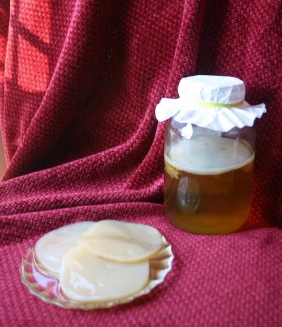 KOMBUCHA Mushrooms Cultures (2) GET TWO Organic