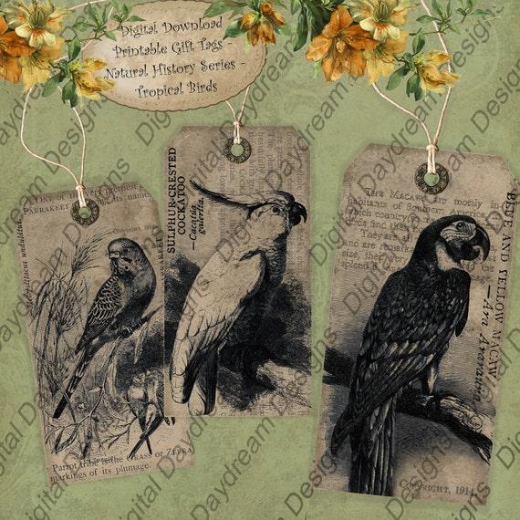 Tag Set Instant Download Download Digital  Printable Collage Shift Gift or Scrapbook Journaling Tag Set - Tropical Birds