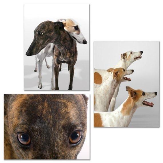 ShopGreyhound's Set of 6 ASSORTED Greyhound Greeting Cards, 4.25 x 5.5