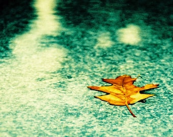 Floating Leaf - 8X12 Print