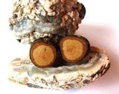 Wood Post Earrings Tiny Oak Tree Branch Studs Wood Jewelry by Hendywood