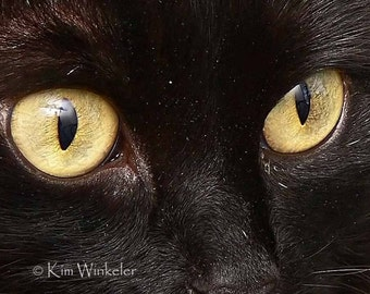 Black Cat Gold Eyes ACEO Fine Art Photograph
